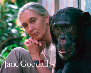 Evolutionary Roots of Human Social Behavior: Jane Goodall