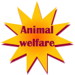 Social Empowerment Cohort: Animal Welfare