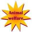 Social Empowerment Cohort: Animal Welfare